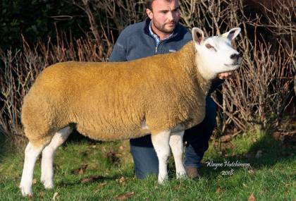 Champion from Cairnam Flock