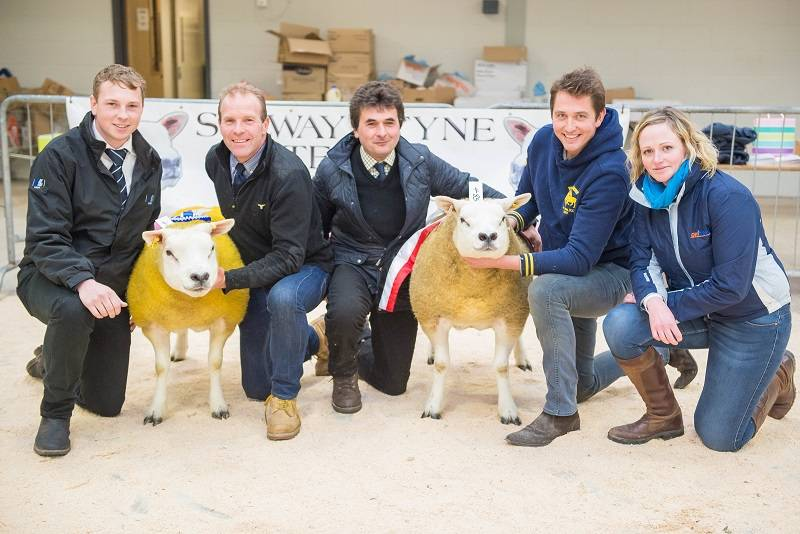 Champion and Reserve with judges Giles Pyman and sponsors Lloyd Ltd and Ovibreed