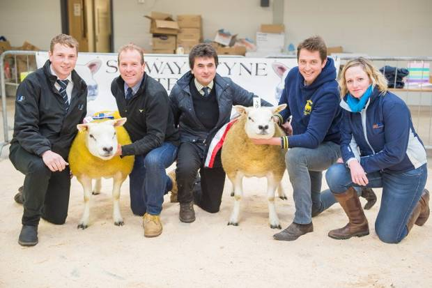 Carlisle In Lamb Sale Report