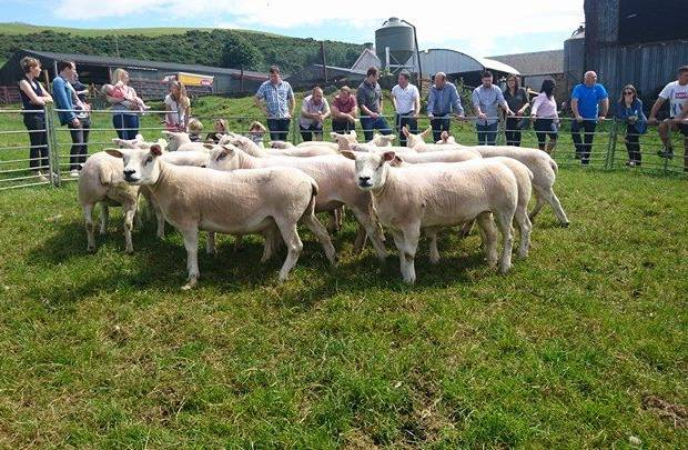 Open Day at Garngour and Teiglum Flocks