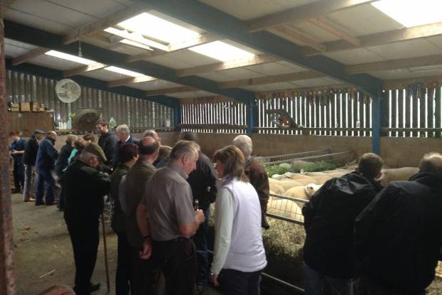 Club Open Day at Stainton Flock