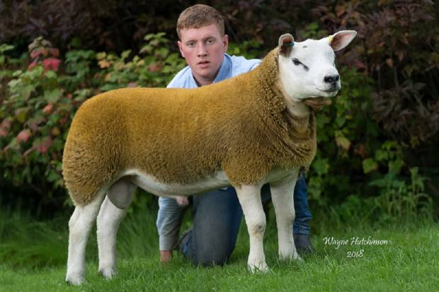 SALE REPORT FROM FIRST SALE NOW AVAILABLE ALSO MORE PICTURES ON GALLERY PAGE